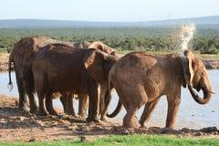 Elefantes que pintan (con vaporizador) el agua foto de archivo libre de regalías