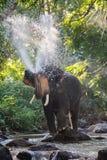 Elefantes que pintan (con vaporizador) el agua Imágenes de archivo libres de regalías