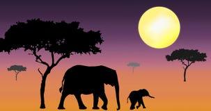 Elefantes que recorren en puesta del sol Foto de archivo