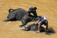 Elefantes que se bañan Fotografía de archivo libre de regalías