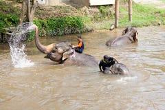 Elefantes que se bañan en el río Fotos de archivo libres de regalías
