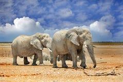 2 elefantes que se colocan en los llanos de Etosha Fotografía de archivo