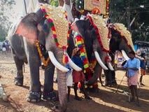 Elefantes que vestem o nettipattam caracterizado no festival do templo de Kallazhi imagem de stock