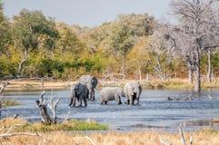 Elefantes sedientos Fotos de archivo libres de regalías