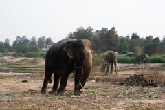 Elefantes tailandeses imagenes de archivo