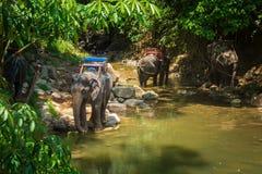 Elefantes tailandeses que descansam no riverbank na selva fotografia de stock
