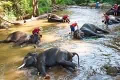 Elefantes tailandeses que toman un baño con el mahout Foto de archivo libre de regalías