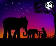 Elefantes y gente Fotografía de archivo libre de regalías