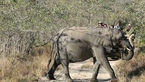 Elefantes y vehículo del safari metrajes
