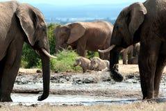 Elefantes y warthog fotos de archivo