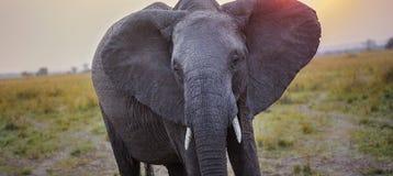 Elefantförmörkelse Royaltyfri Fotografi