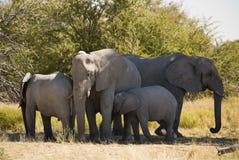 Elefantfamilie Lizenzfreies Stockbild