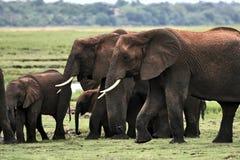 Elefantfamilie lizenzfreies stockfoto