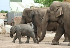 Elefantfamilie Stockfotografie