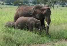Elefantfamilie Afrika-Tanzania Lizenzfreies Stockfoto