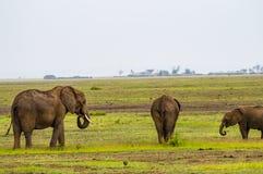 Elefantfamilie in der Savannenlandschaft von Amboseli Lizenzfreies Stockbild