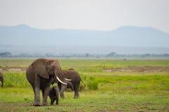 Elefantfamilie in der Savannenlandschaft von Amboseliau Lizenzfreies Stockbild