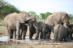 Elefantfamilie, die Bad nimmt Lizenzfreie Stockfotografie