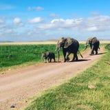 Elefantfamilie, die einen Spaziergang macht lizenzfreie stockfotografie