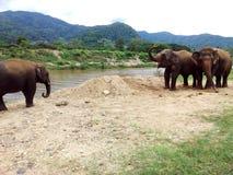 Elefantfamilie durch Fluss Stockfotos