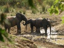 Elefantfamilie am waterhole lizenzfreies stockfoto