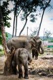 Elefantfamiliengruppe mit Mutter und zwei Schätzchen Stockbild
