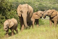 Elefantfamilienspaß stockfoto