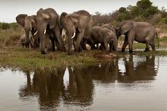 elefantfamilj Arkivfoto