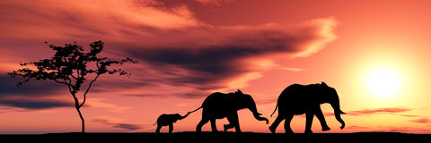 elefantfamilj Arkivbild