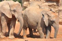 elefantfamilj Royaltyfria Bilder