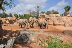 elefantfamilj Royaltyfri Fotografi