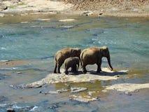 elefantfamilj arkivfoton