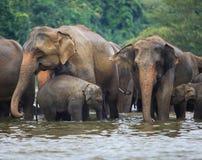 Elefantfamilj i vatten royaltyfri bild