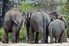 Elefantfamilj, Maasai Mara Nature Reserve, Kenya, Afrika Fotografering för Bildbyråer