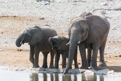 Elefantfamilj på Waterhole Arkivbild