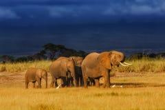 Elefantfamilj precis för regnet Arkivfoto