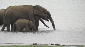 Elefantfamilj vid floden royaltyfri bild