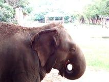 Elefantfenster Stockfotos