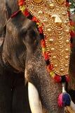 elefantfestival Arkivbild