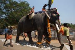 elefantfestival kerala Arkivfoto