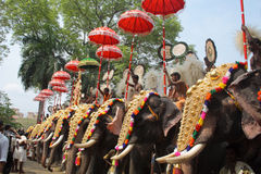elefantfestivalthrissur Royaltyfri Fotografi