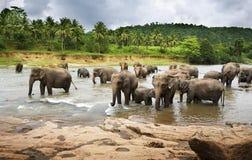 elefantflock royaltyfri foto