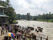 Elefantflockbadning i floden Royaltyfria Bilder