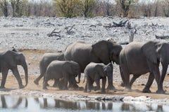 Elefantflockwaterhole Royaltyfri Foto