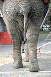 Elefantfot Royaltyfria Foton