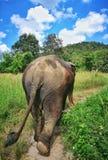 Elefantfristad, Thailand, Chian Mai Provice royaltyfri bild