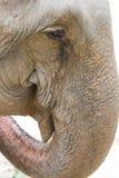 Elefantöga Royaltyfri Bild