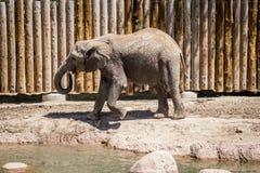 Elefantgehen Lizenzfreie Stockfotografie