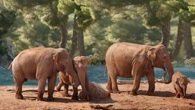 elefantgrupp Royaltyfri Bild