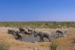 elefantgrupp Arkivfoto